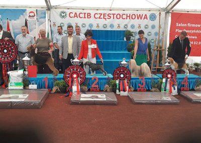 legowiska-dla-psow-sponsor-2