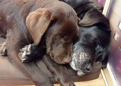 pies-spiacy-na-legowisku-valde-4
